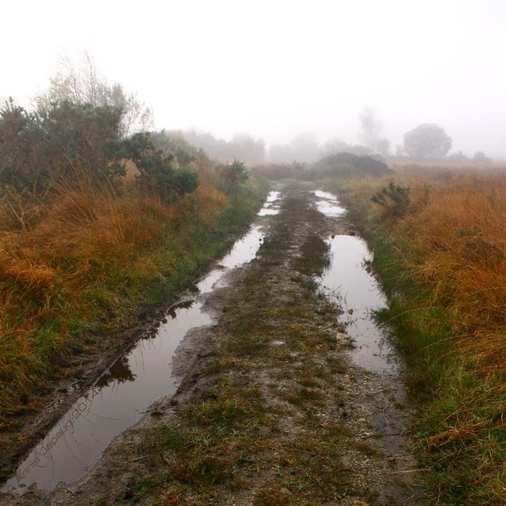 lots of puddles on a muddy country road, rusty autumn grass, fog in the distance