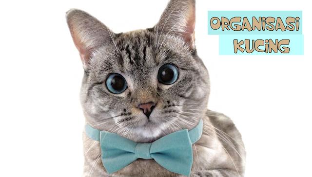 Organisasi Kucing di Indonesia