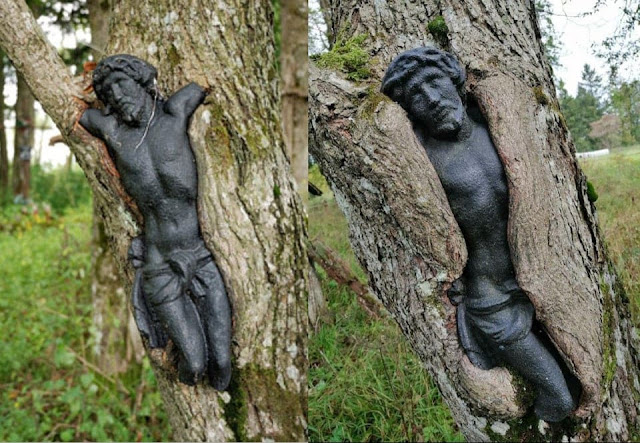 Abandoned cemetery in Poland: a tree lives its own life
