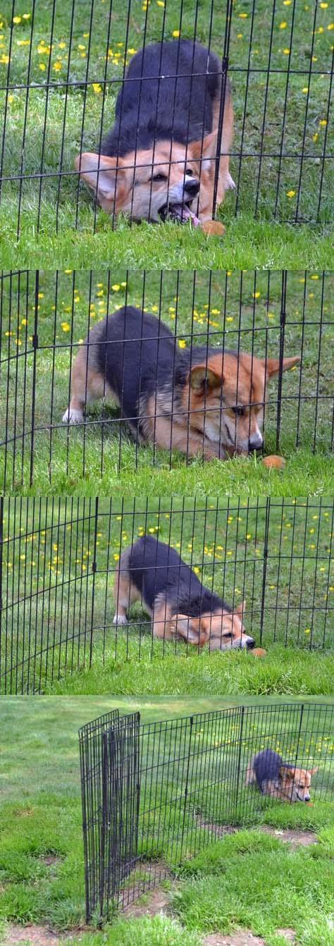 lustiger kleiner Hund sucht Leckerli hinter Zaun - witziges Hunde Bild