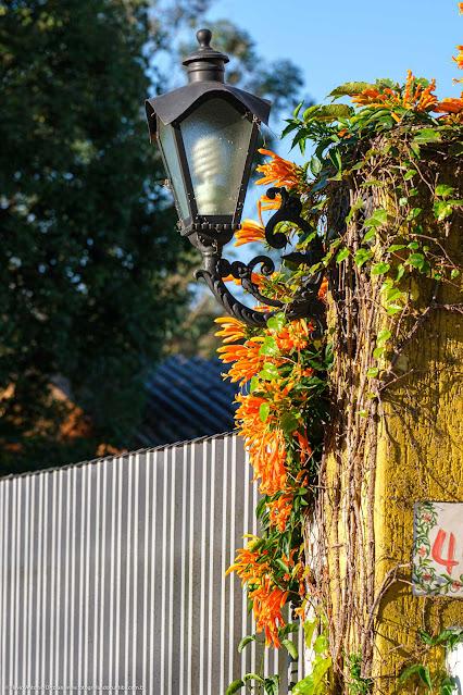 Luminária e flores em um muro