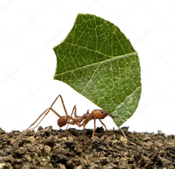 The Ant and the leaf