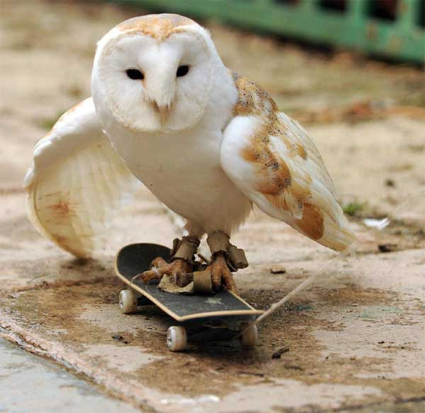 animals acting humans human animal cool funny doing damn owl features damncoolpictures they trying these display