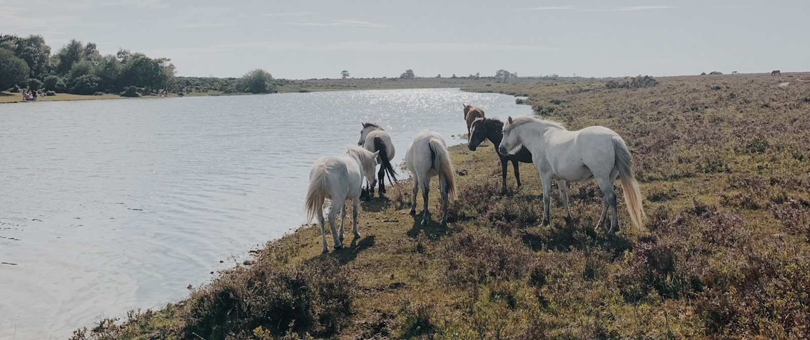 Things To Do In New Forest, Dalry Rose Blog, Hampshire Blog, Hampshire Lifestyle Blog