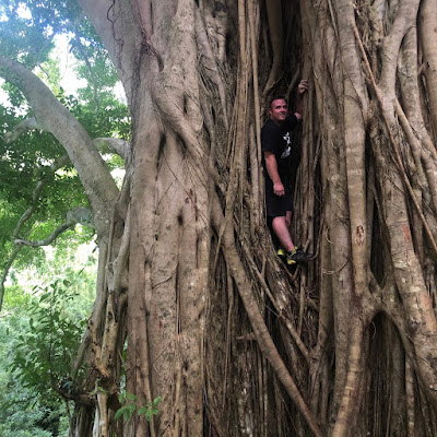 banyan tree, vacation, travel, explore, fun, nature