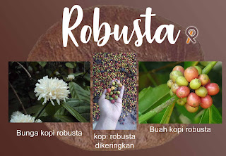 kopi jujur jenis robusta