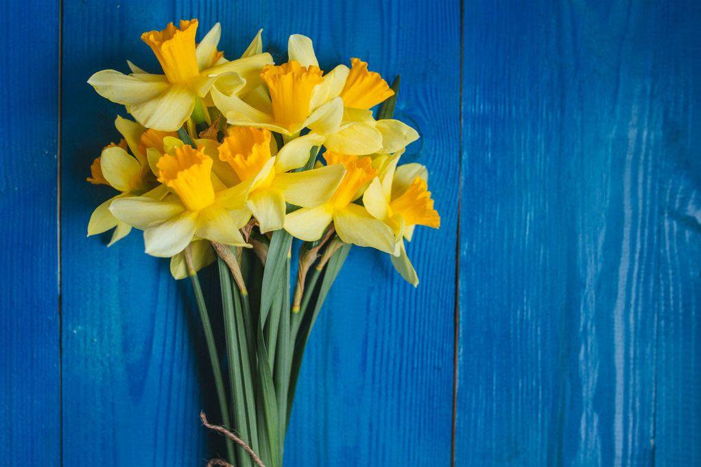 cvijeće-flower-narcis-vrt
