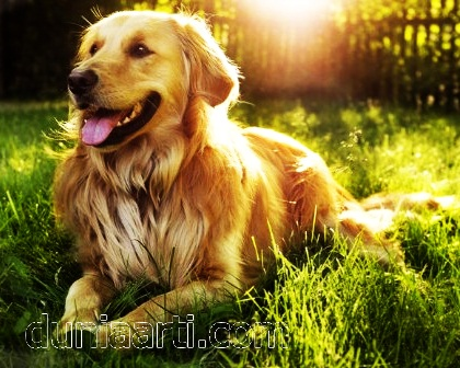 Anjing Yang Bagus