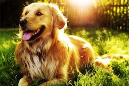 31 Arti Mimpi Memandikan Anjing Menurut Primbon Jawa
