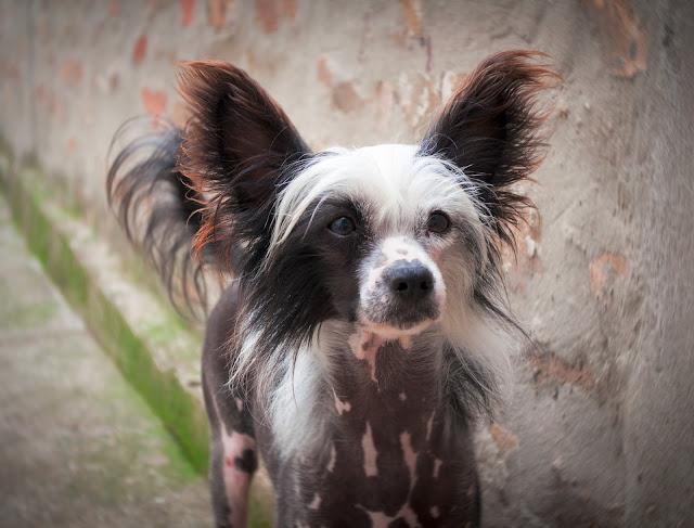 African Dog Breeds - South African Dog Breeds