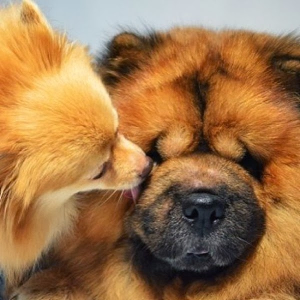 http://photofun4u.com/cutest-pups-on-instagram