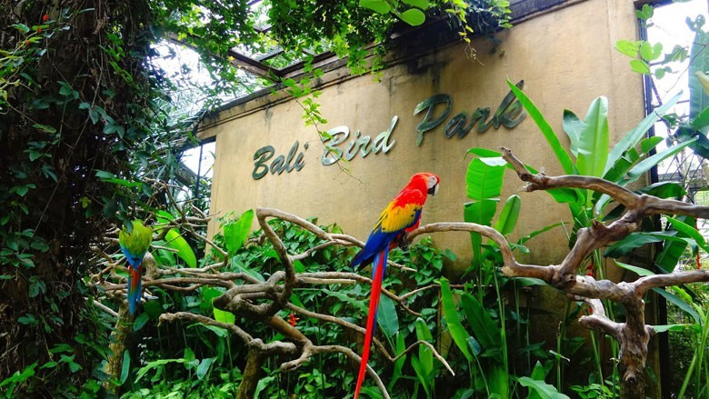 Melihat Ribuan Koleksi Burung di Bali Bird Park