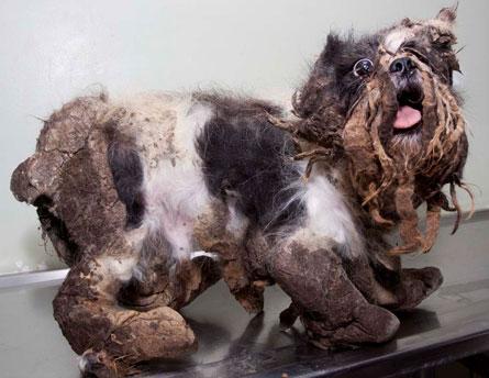 Shih Tzu Wallpaper Iphone The Poor Dog Saved New Stylish Wallpaper