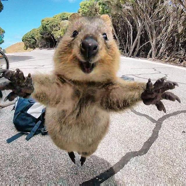 Cả thế giới tan chảy vì chú chuột túi mini thích chụp ảnh tự sướng