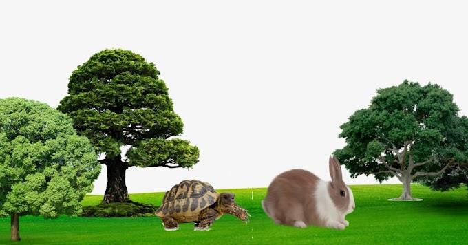 कछुआ और खरगोश की कहानी | Rabbit and Tortoise Story in Hindi -
