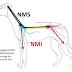 [pdf] Apostila de clínica médica de cães e gatos