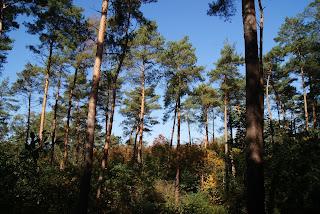 Hohe, lichte Bäume erlauben einen Blick auf den strahlend blauen Himmel.