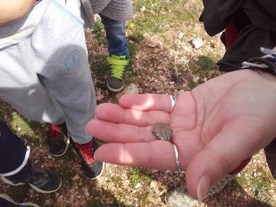 Μαθητής δημοτικού βρήκε αρχαίο νόμισμα στον Αρχαιολογικό Χώρο της Κασσώπης