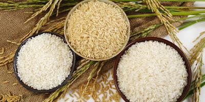apa itu beras hibrida dan bagaimana cirinya