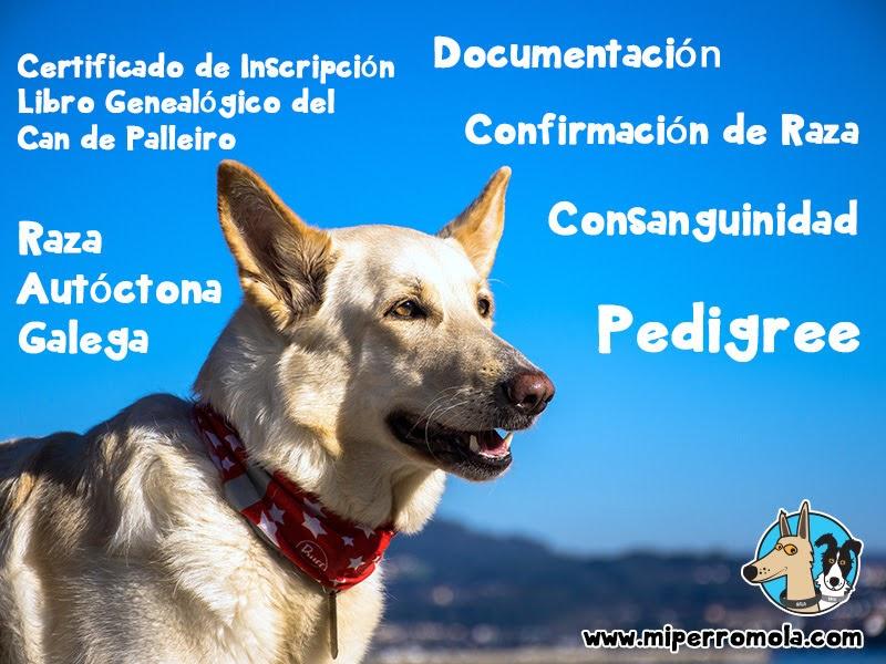 Can de Palleiro con cielo azul de fondo