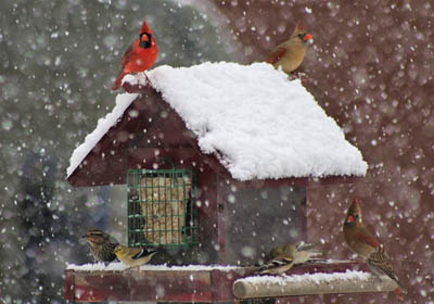 Photo of birds at bird feeder in winter, covered in snow