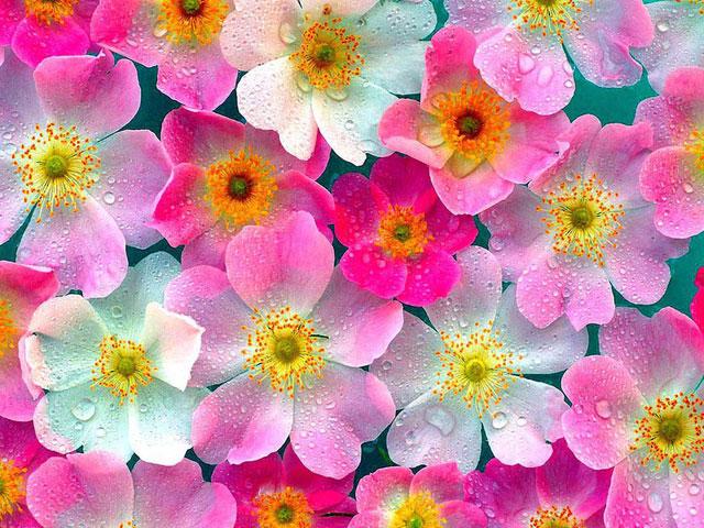 nature ka photo download fool flower