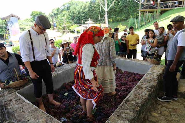 Evento tradicional da cultura portuguesa acontece em São Roque