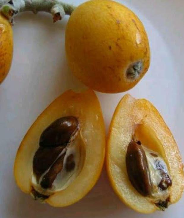 Bibit Biwa Leci Kuning Maluku Utara