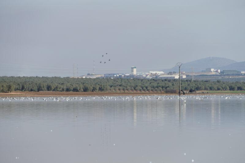 Laguna con aves. Málaga