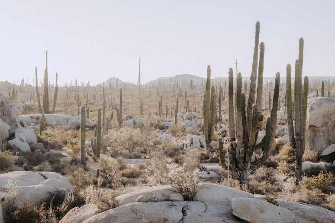 51,4 fokot mértek Mexikóban