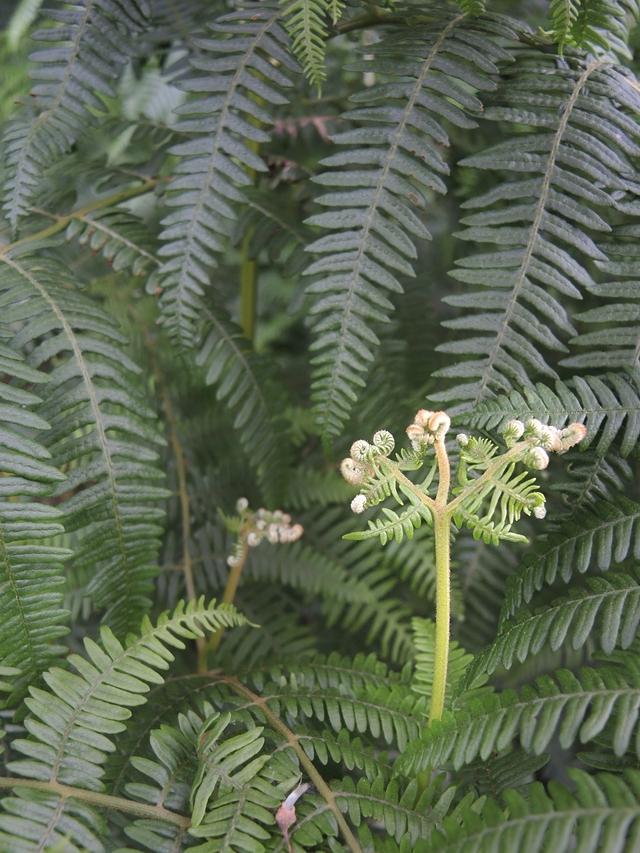 Ertbruggebos: over groen na regenval en over boeken over bomen