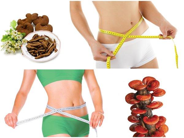 dùng nấm linh chi tăng cân hay giảm cân