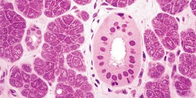 Tejidos de los seres vivos e histologia
