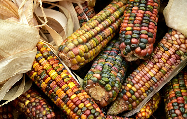 Health Benefits of Corns - RictasBlog