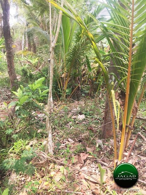 Tanah dekat Studio Alam Gamplong