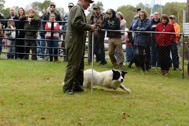 Ky Wool Festival Sheep and Wool Tent: Sheep Shearing And Sheep Herding