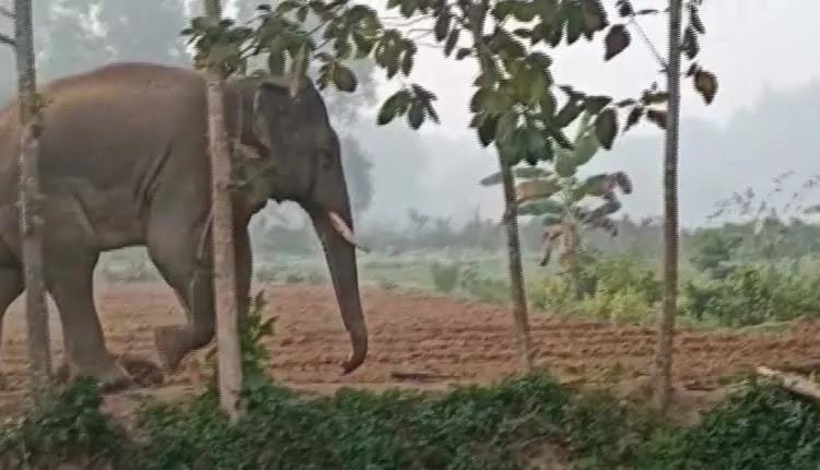 Jharkhand-elephant-Giving-Sleepless-Nights-To-Balasore-Residents