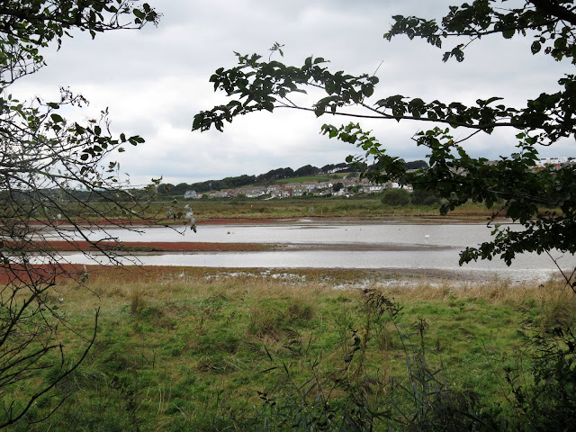 Lodmoor RSPB, Dorset