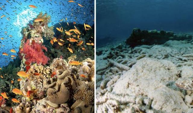 Gambar  . Kerusakan Terumbu Karang Akibat Pemanasan Global