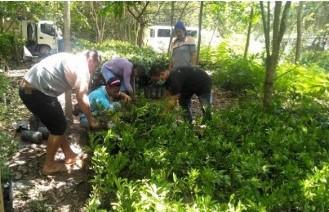 Batangas PG-ENRO distributes 24,296 tree seedlings