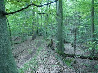 Keltenschanze Holzhausen 1