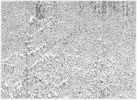 Richard Müller: dessin Winterzeichnung 7