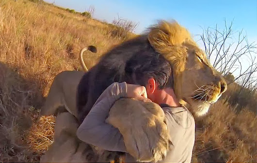 Why Not Hug A Lion?- Day 9 of 30