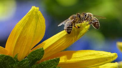 زوج من النحل يقومان معا بفتح زجاجة صودا يجذب الملايين