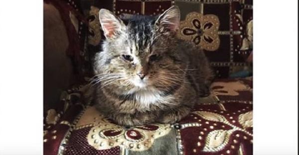 Хозяин бросил кота в подъезде, а сам переехал в другой дом. Он жил в картонной коробке, пока не выпал снег…