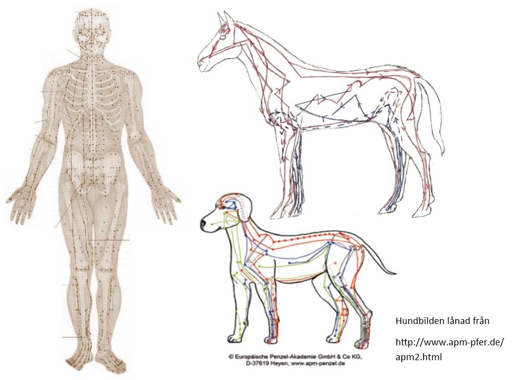 kronisk bronkit häst behandling