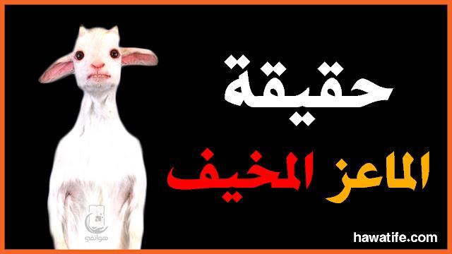 الماعز المخيف