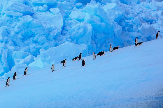 Penguins and icebergs seen on a luxury cruise to Antarctica