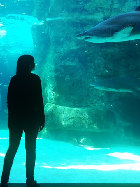 Girl looking at shark at the Two Oceans Aquarium, Cape Town