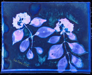 Wet Cyanotype_Sue Reno_Image 117
